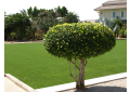 Magic Carpet Artificial Turf